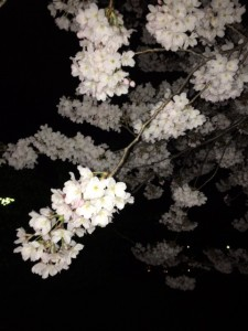 たけのこ公園桜アップ